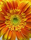 Kathy's Flower