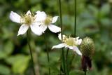 Thimbleweed 2
