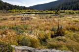 Cub Lake Trail 3