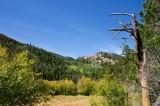Cub Lake Trail 5