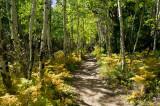 Cub Lake Trail 7