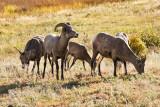 Sheep Lakes 2