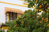 Naranjas y Hosteria
