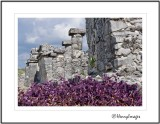 HENRY IMAGES, YUCATAN PHOTOGRAPHY by Brent Henry