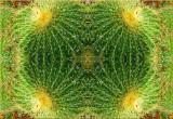 Cactus Posse