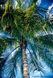Hawaii_0058-copy.jpg