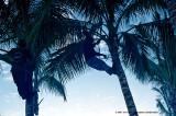 Hawaii_0059-copy.jpg
