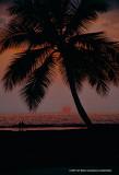 Hawaii_0075-copy.jpg