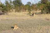 Botswana 2012-1437.jpg