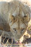 Botswana 2012-1462.jpg