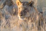 Botswana 2012-1525.jpg