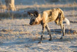 Botswana 2012-1631.jpg