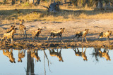 Botswana 2012-1661-Edit.jpg