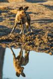 Botswana 2012-1665.jpg