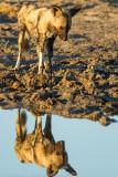 Botswana 2012-1678.jpg