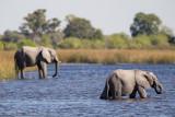 Botswana 2012-1944.jpg