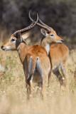 Botswana 2012-1965.jpg