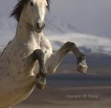 I call him Black Ice. One tough horse.
