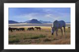 White Stallion with Desert Background