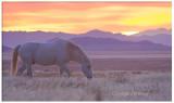 High Desert White Stallion