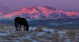 Dark Horse with Sunset.