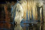 Elvis in the waterhole