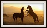 Dusty sunrise fiesty stallion