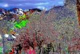 House, trees, mountains