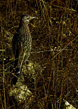Well-Camouflaged Road Runner