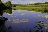 Pond and Cornfield