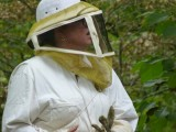 HONEY HARVESTING IN WARNER PARK NASHVILLE