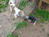 dogpark 014 (Copy).JPG