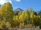 Eastern Sierra Aspen Ride - 2011
