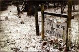 january 23Pet Cemetery