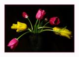 january 29Fan of Tulips