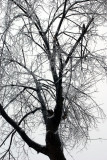 Feb  ice 11 008.jpg