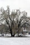 Feb  ice 11 019.jpg