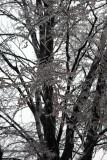 Feb  ice 11 022.jpg