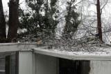 Feb  ice 11 037.jpg
