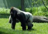zoo 5-12 001.jpg