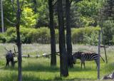 zoo 5-12 144.jpg