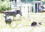 zoo 5-12 148.jpg