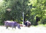 zoo 5-12 172.jpg