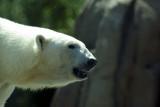 zoo 5-12 197.jpg