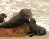42 Fur Seals.jpg