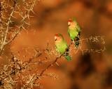 44 Love Birds.jpg