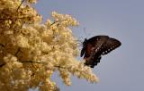 Jul:  Butterfly Visit.jpg