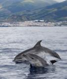Azorean Wildlife  - Summer 2011