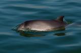 Harbour Porpoises of the Oosterschelde - De bruinvissen van de Oosterschelde