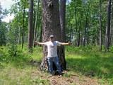 Giant Shortleaf Pine